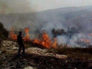 Brandstiftung durch jüdische Siedler
